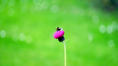 Бесплатное стоковое фото с максросъемка, насекомое, Пчела, флора