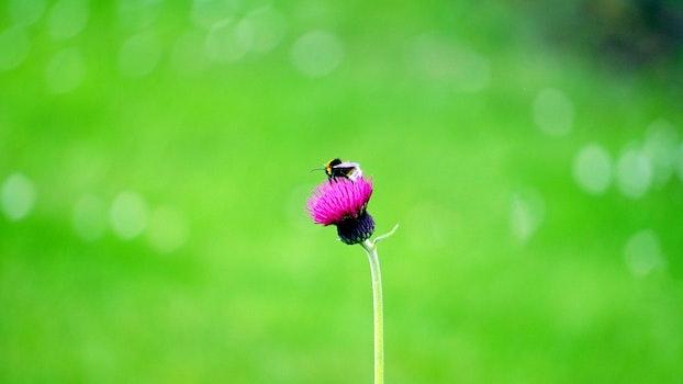Kostenloses Stock Foto zu blume, biene, insekt, makro