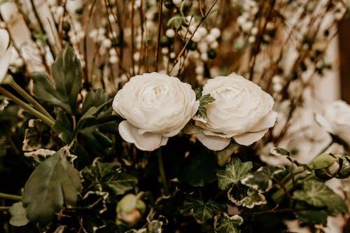 Základová fotografie zdarma na téma barvy, bílá, flóra, jasný