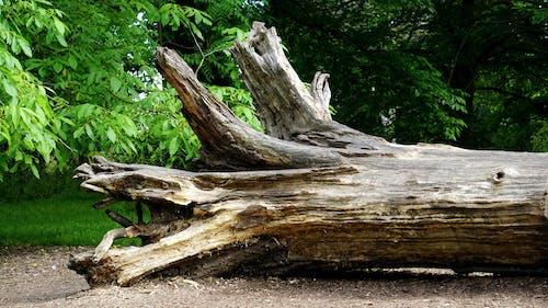 Kostnadsfri bild av bark, dagsljus, flora, gräs
