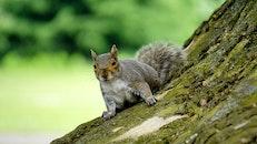 animal, cute, squirrel