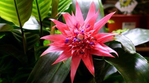 Základová fotografie zdarma na téma barevný, barvy, exotický, flóra