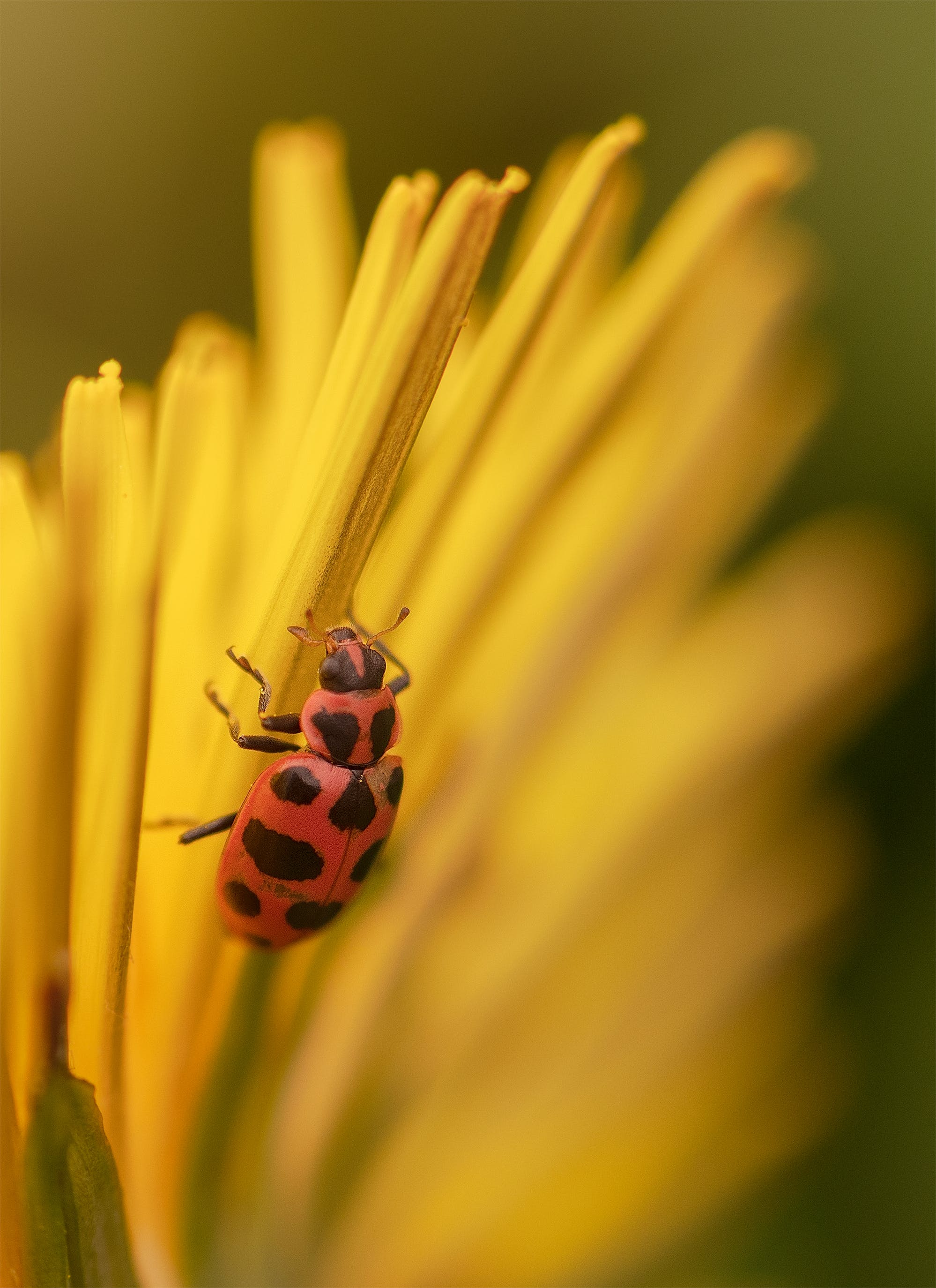 Gratis stockfoto met #insects, #macro