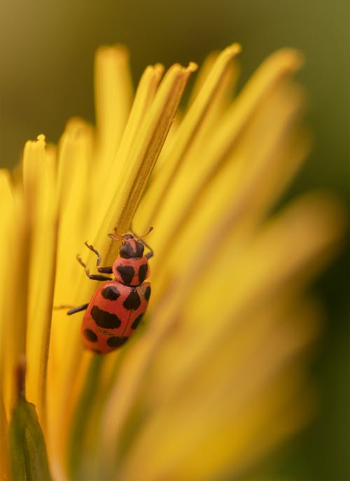 Immagine gratuita di #insects, #macro