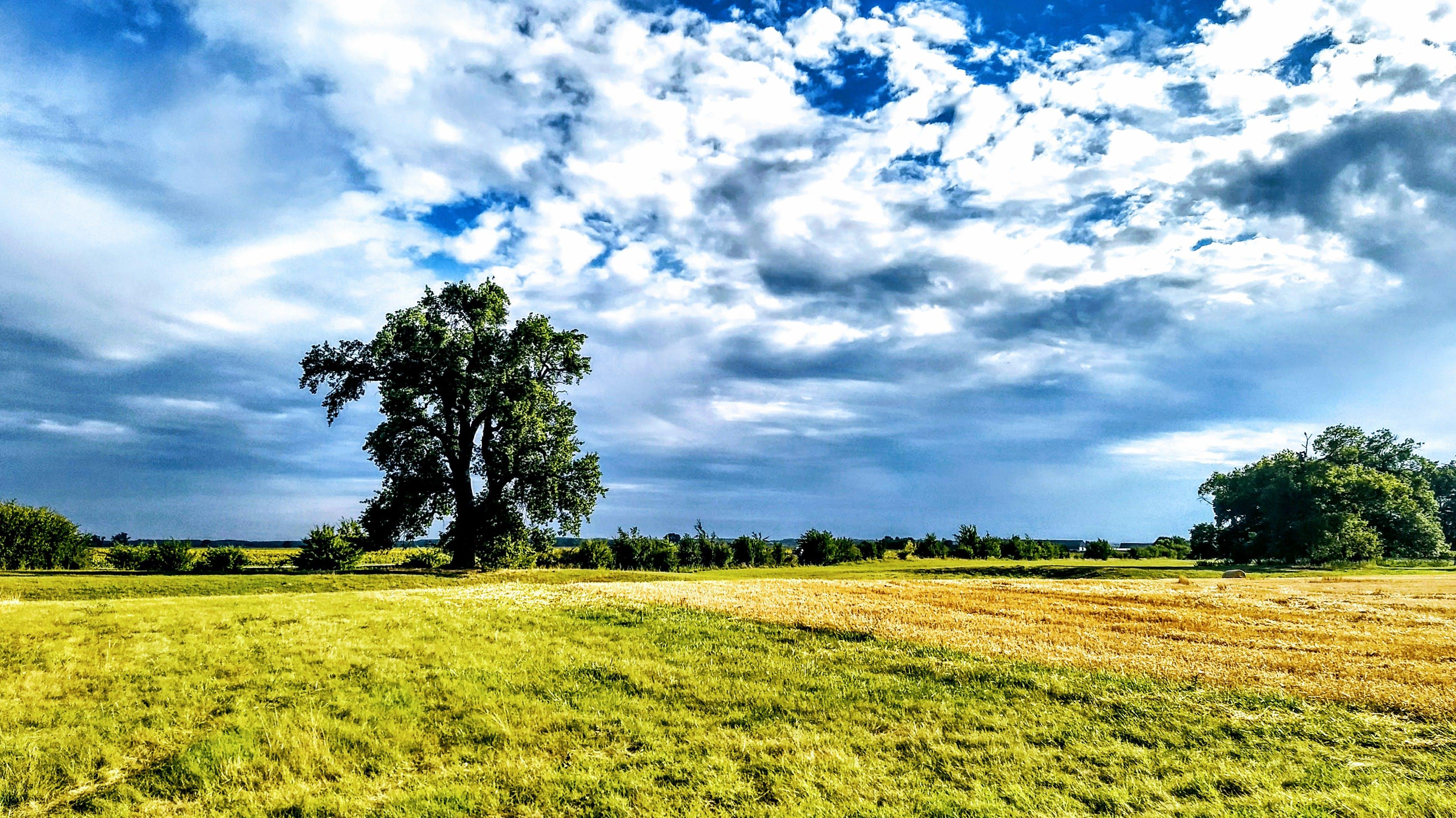 Foto stok gratis alam, awan, bidang, hijau