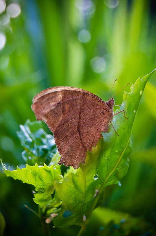 Gratis lagerfoto af sommerfugle