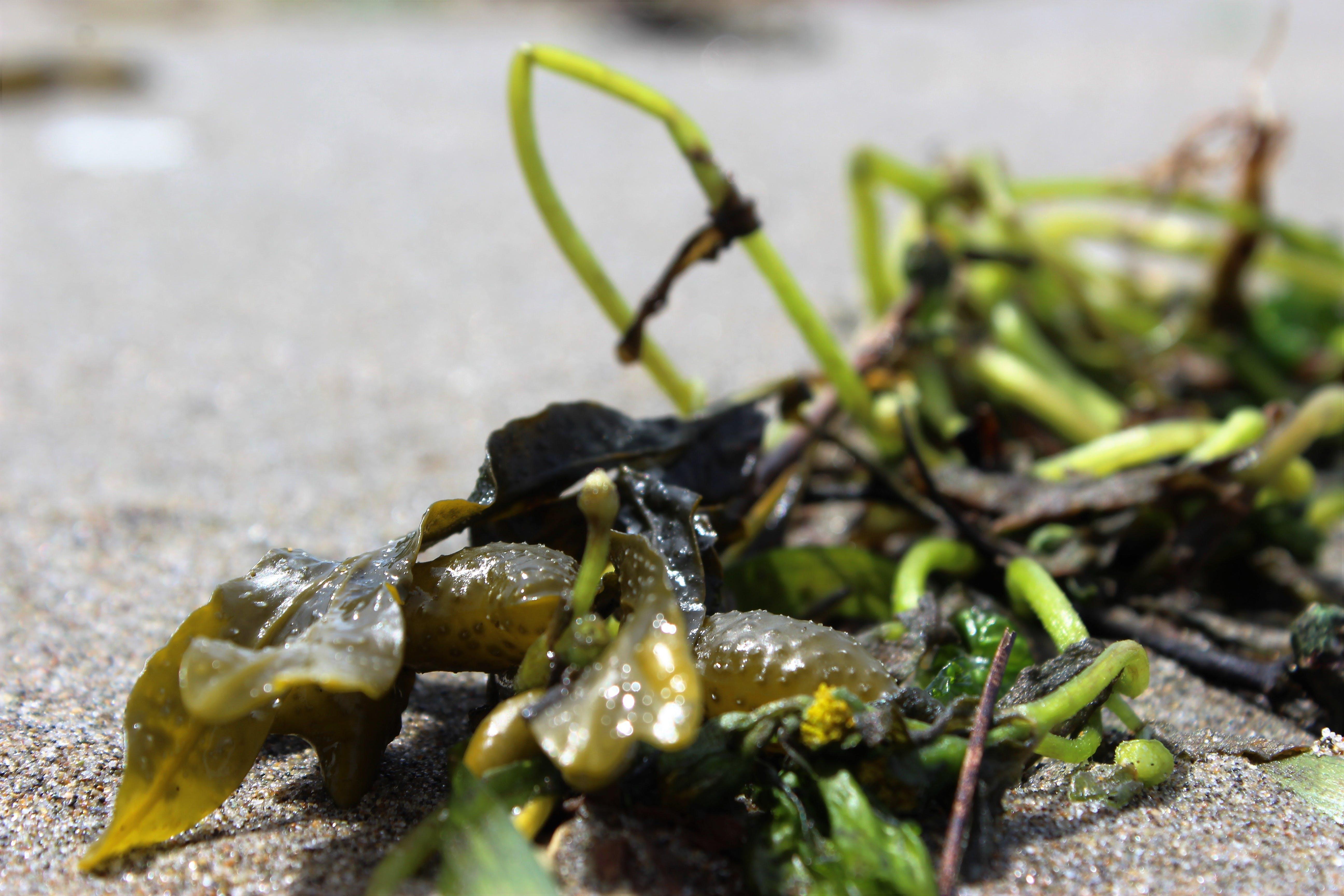 beach, sand, seaweed