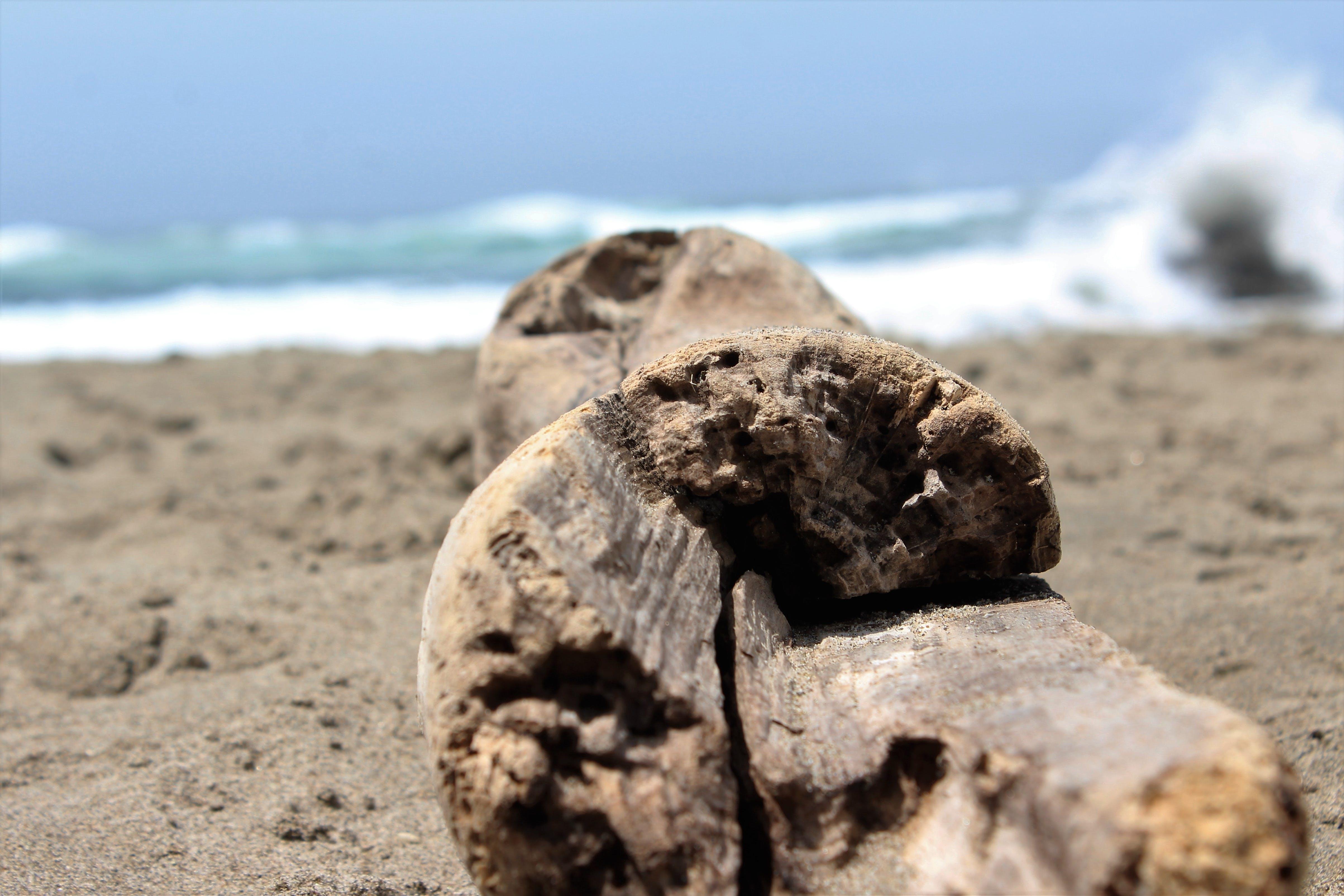 Free stock photo of beach, log, driftwood