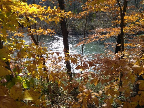 Free stock photo of fall leaves, river bank, riverside