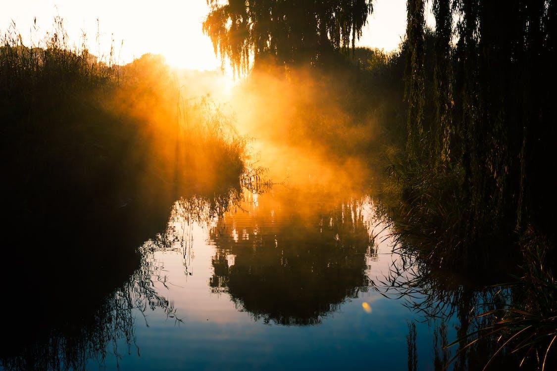 Silhouette Fotografie Von Bäumen In Der Nähe Von Wasser