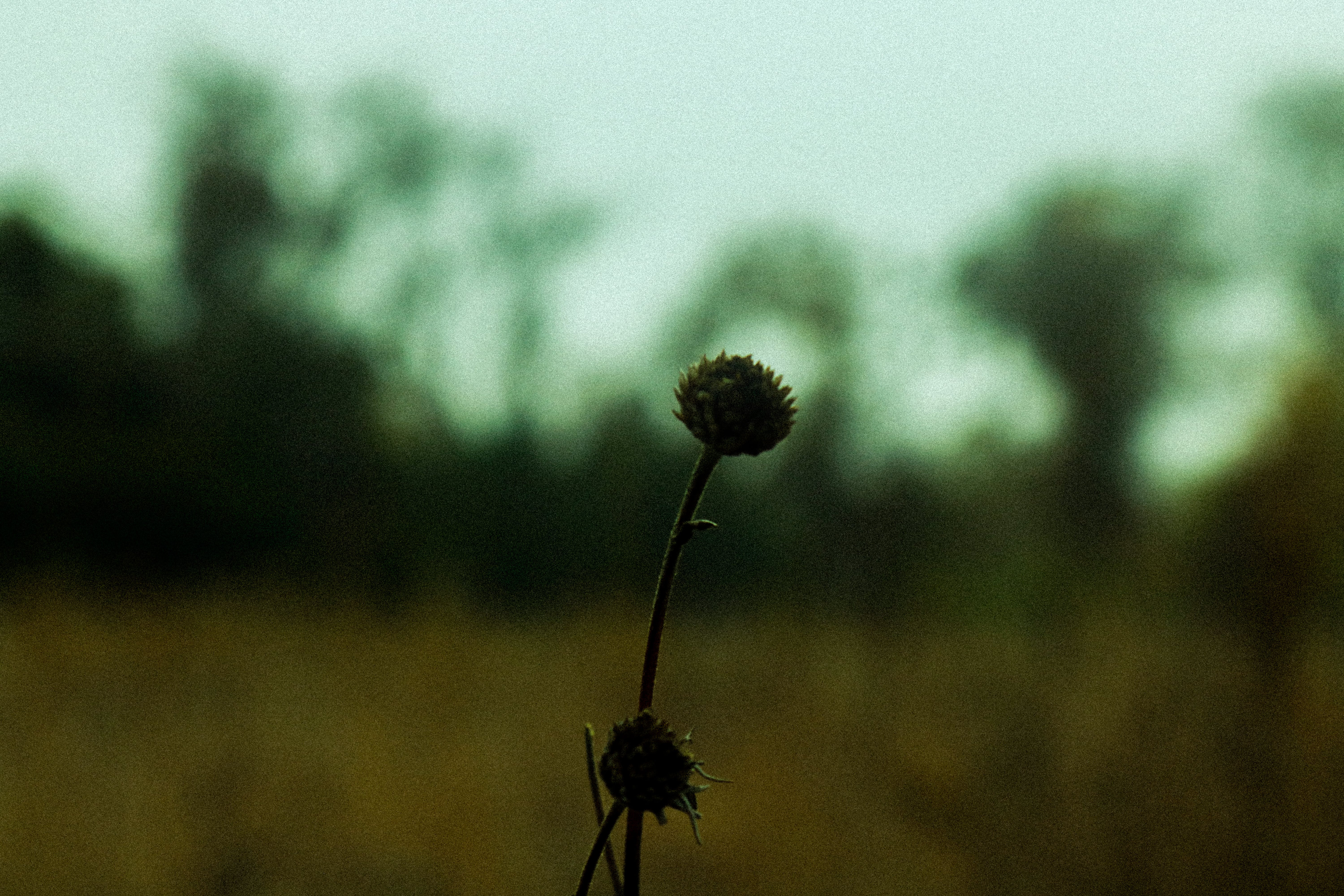 Free stock photo of #forest, dead, flower, green