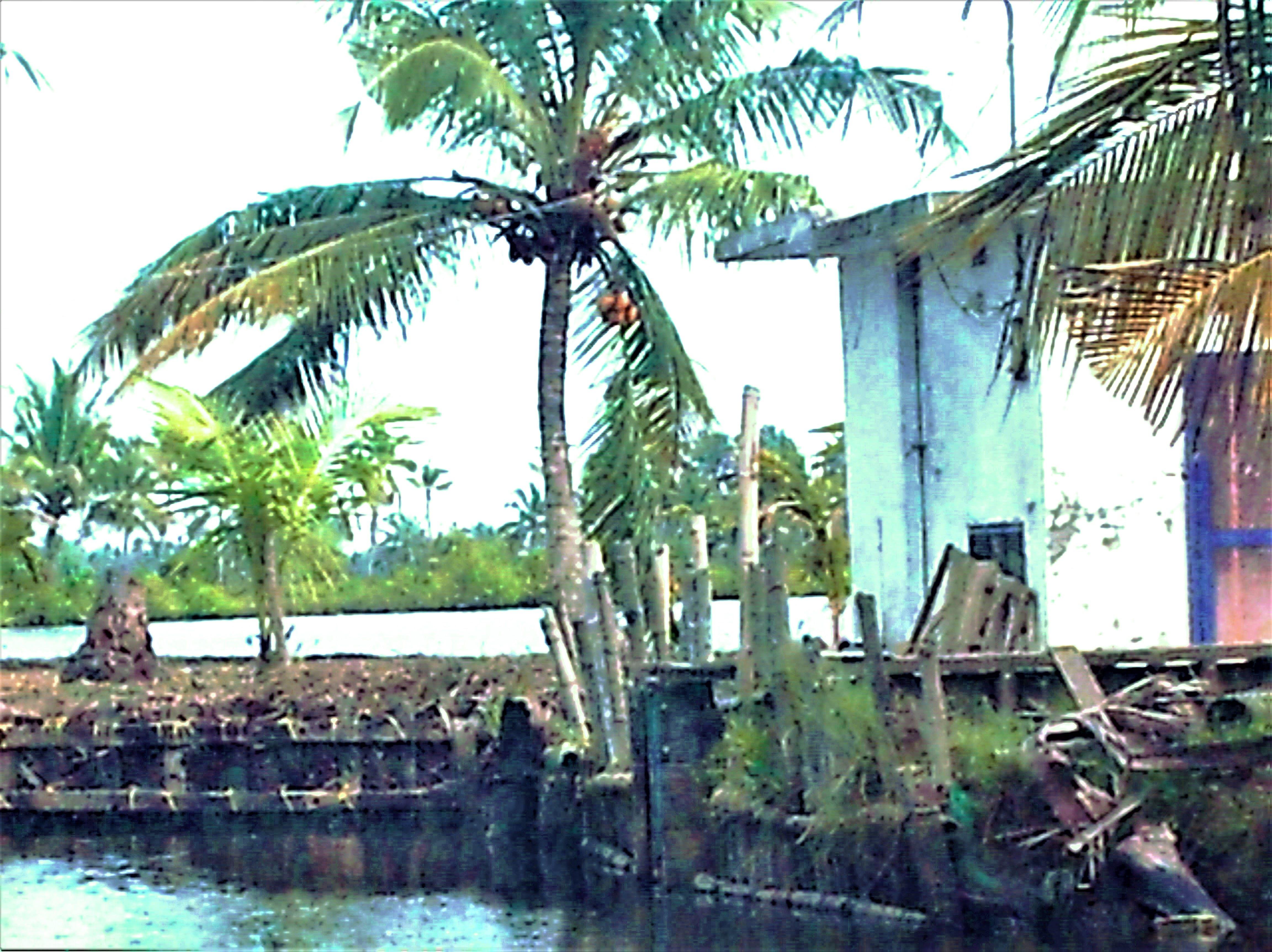 Free stock photo of evergreen, kerala, landscape, riverside