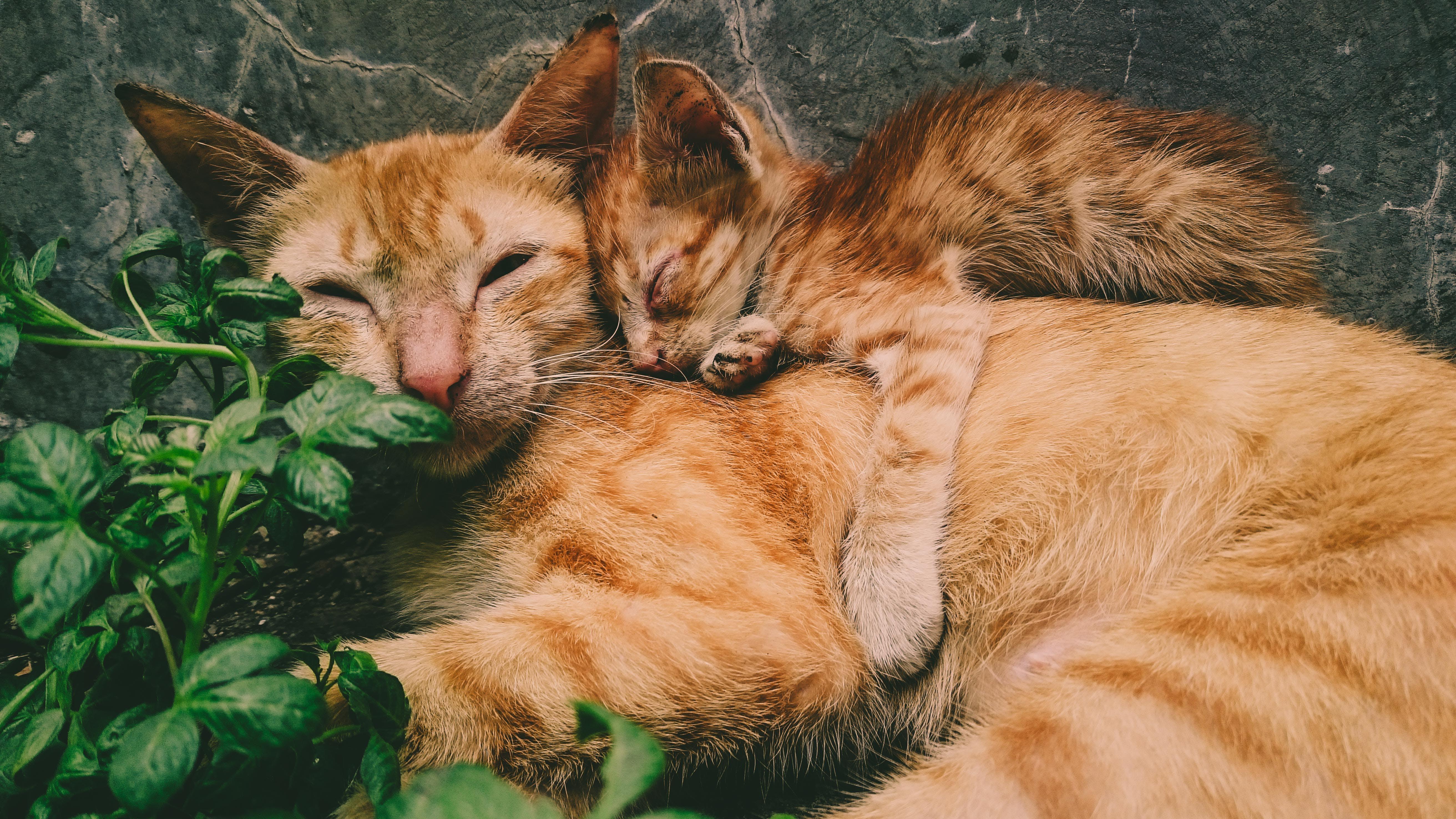 Foto profissional grátis de adorável, animais, animais de estimação, bigodes de gato