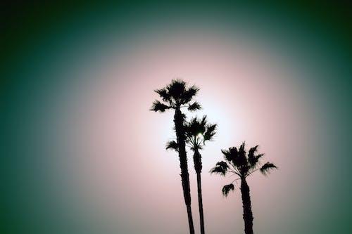 Безкоштовне стокове фото на тему «пальми»