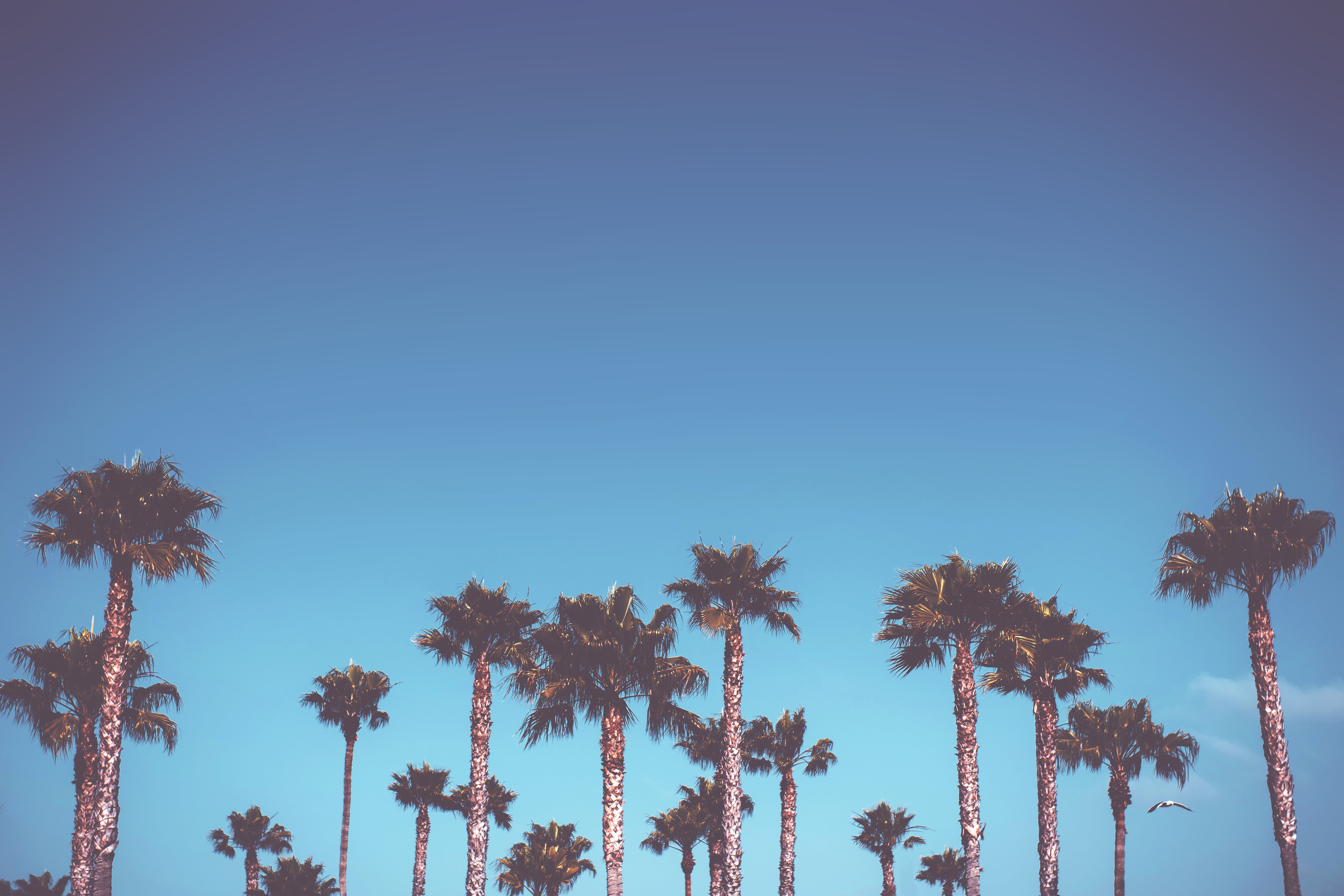 Free stock photo of sky, desktop, background, palm trees