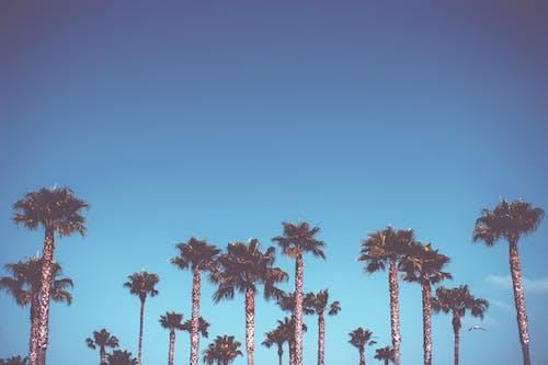 Безкоштовне стокове фото на тему «небо, пальми, робочий стіл, фон»