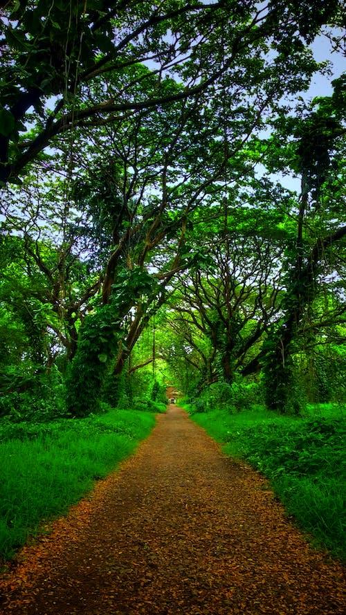 #mobilechallenge, #나무, #숲, 경치의 무료 스톡 사진