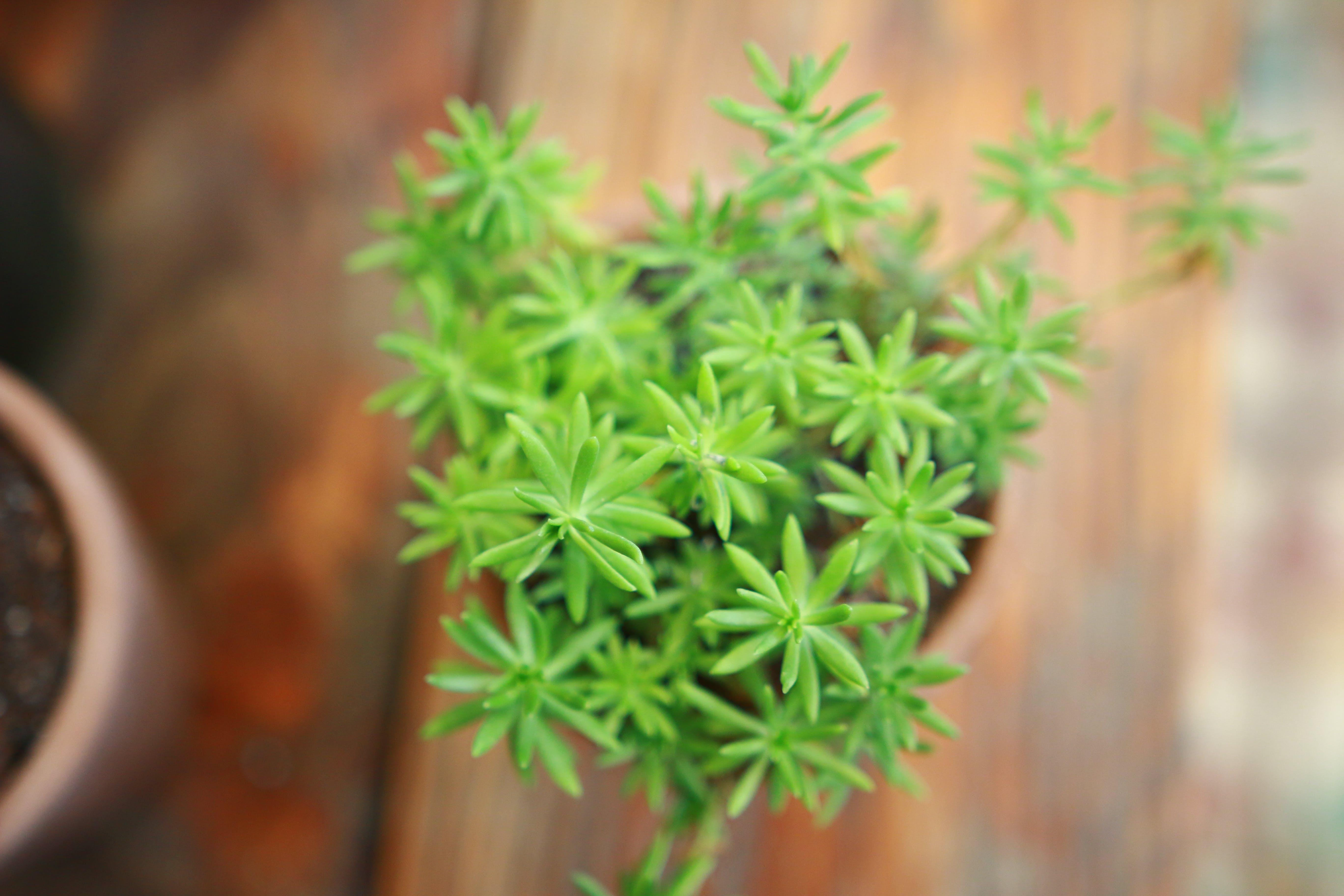 Kostenloses Stock Foto zu makro, nahansicht, pflanze, topf
