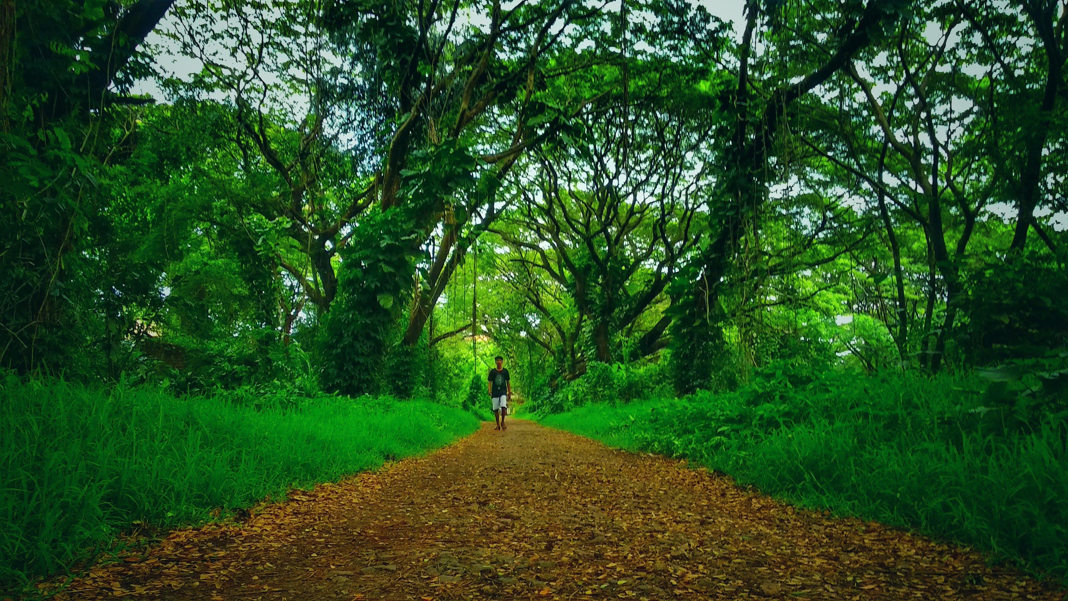 Free stock photo of #outdoorchallenge, #Tree, abandoned, adventure