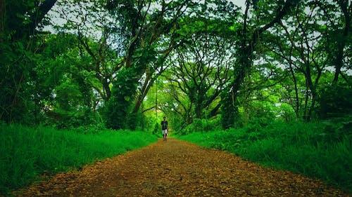 #mobilechallenge, #나무, 가벼운, 경치의 무료 스톡 사진