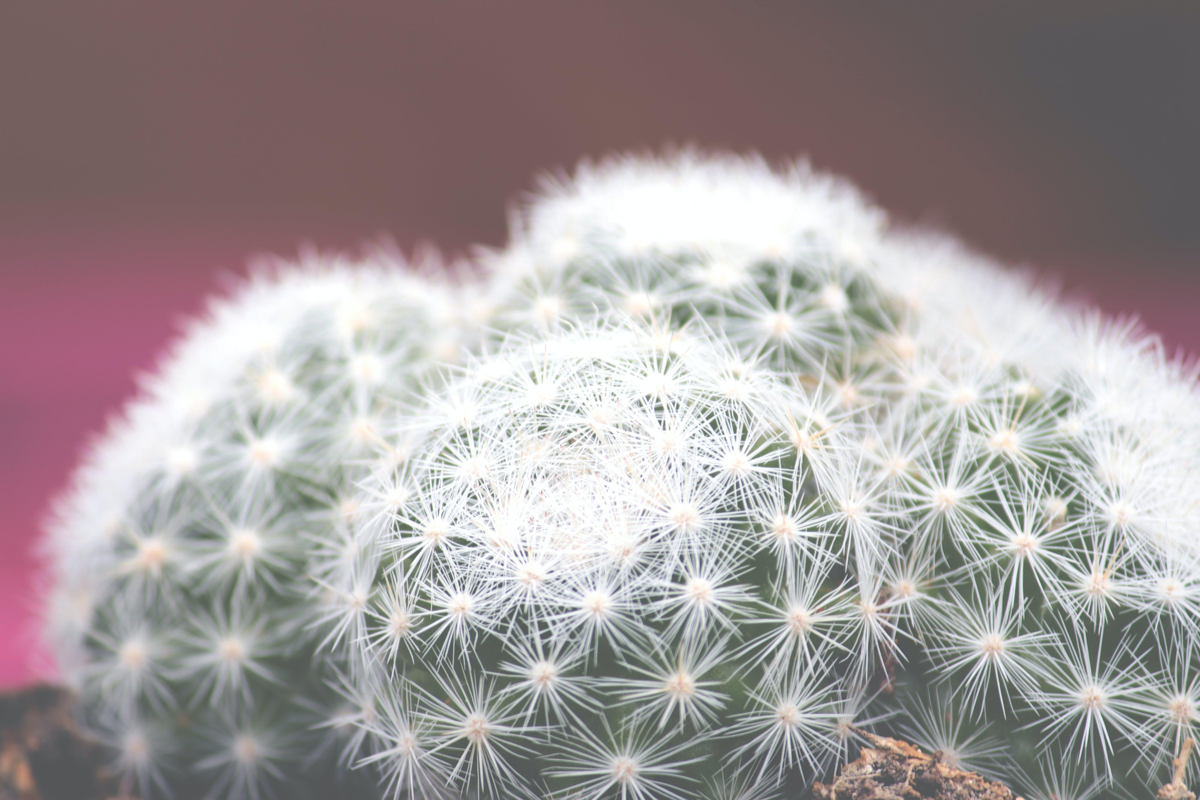 Free stock photo of cactus, cactus flower, cactus plant, cactuses