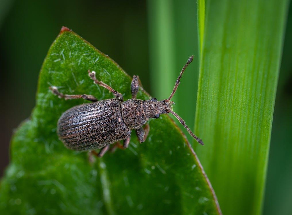 állat, antenna, beetle