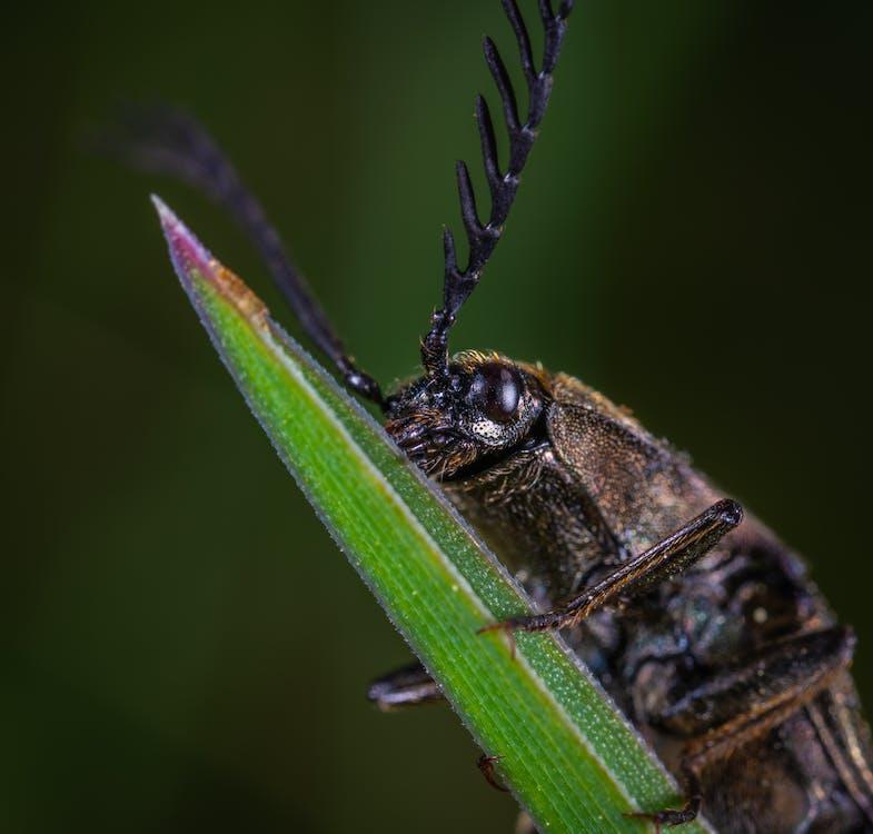 Closeup Photo of Brown Beetle
