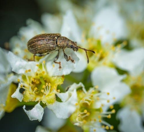 Kostnadsfri bild av bi, blommor, bubbla, färg