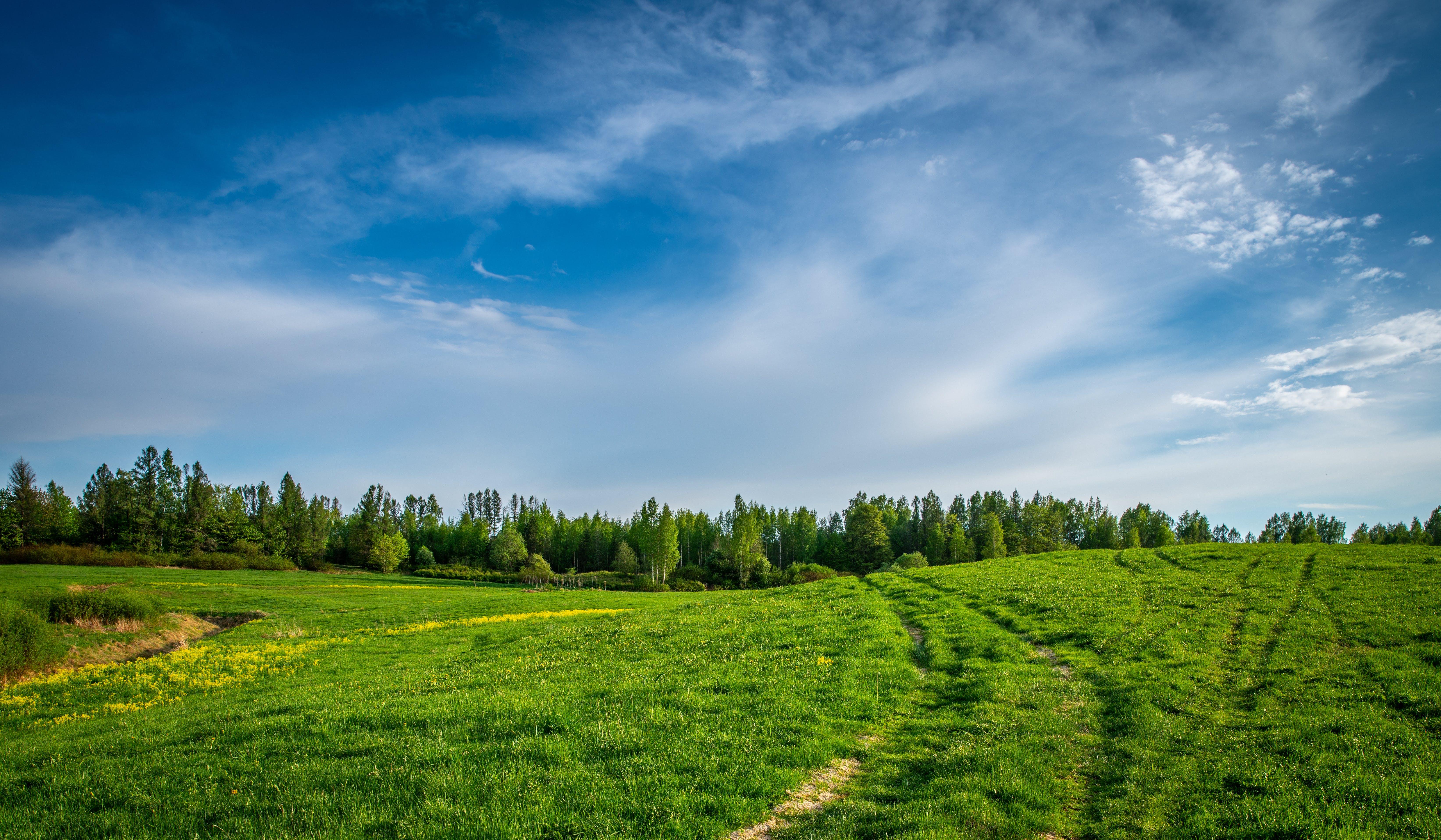 Grass Field Near Field of Trees