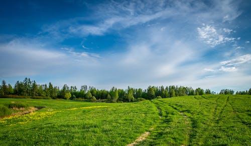 Fotobanka sbezplatnými fotkami na tému denné svetlo, hracie pole, krajina, leto