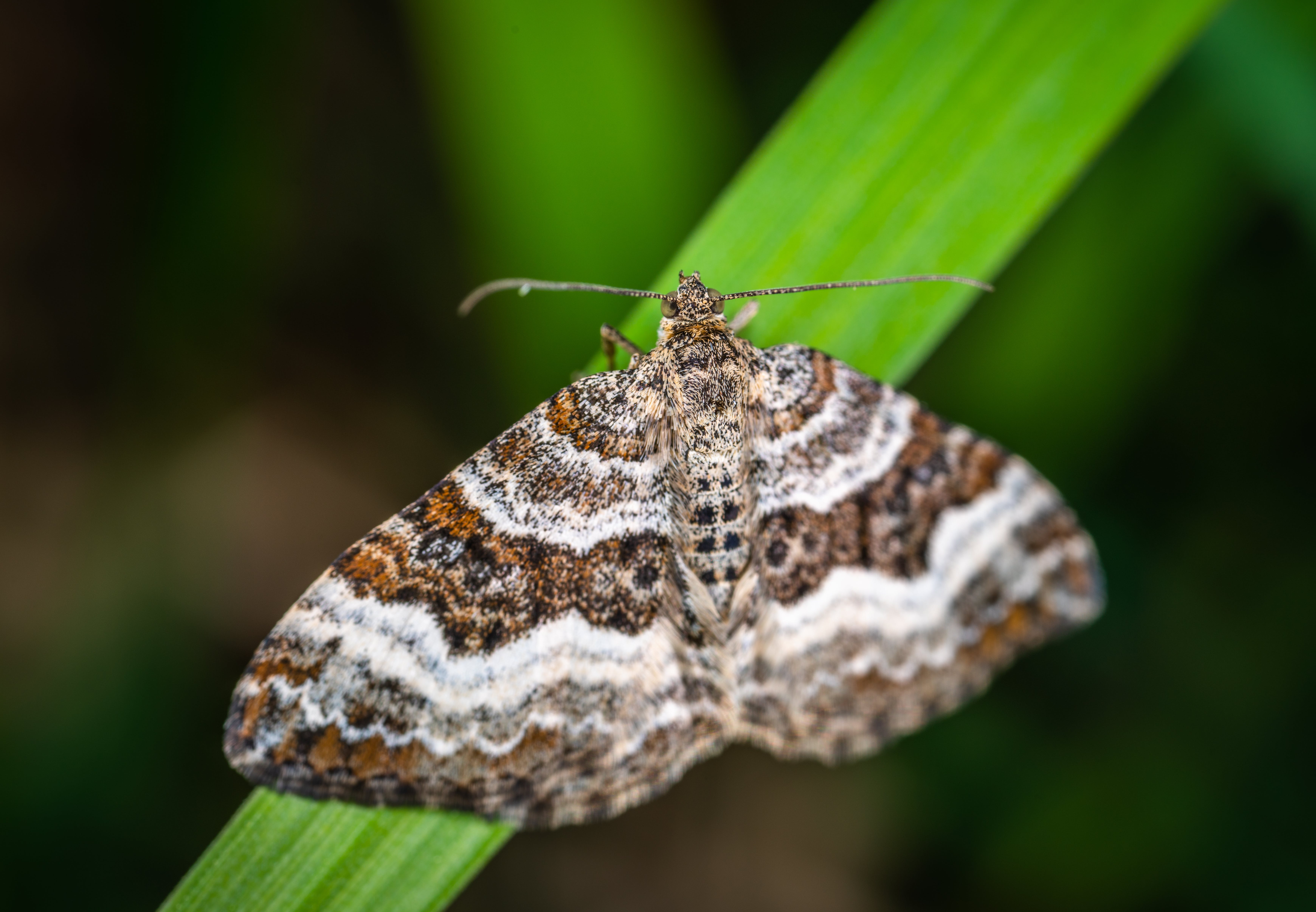 Selective Focus Photography of Gray, Brown, and Black Striped Butterfly Perched on Green Leaf