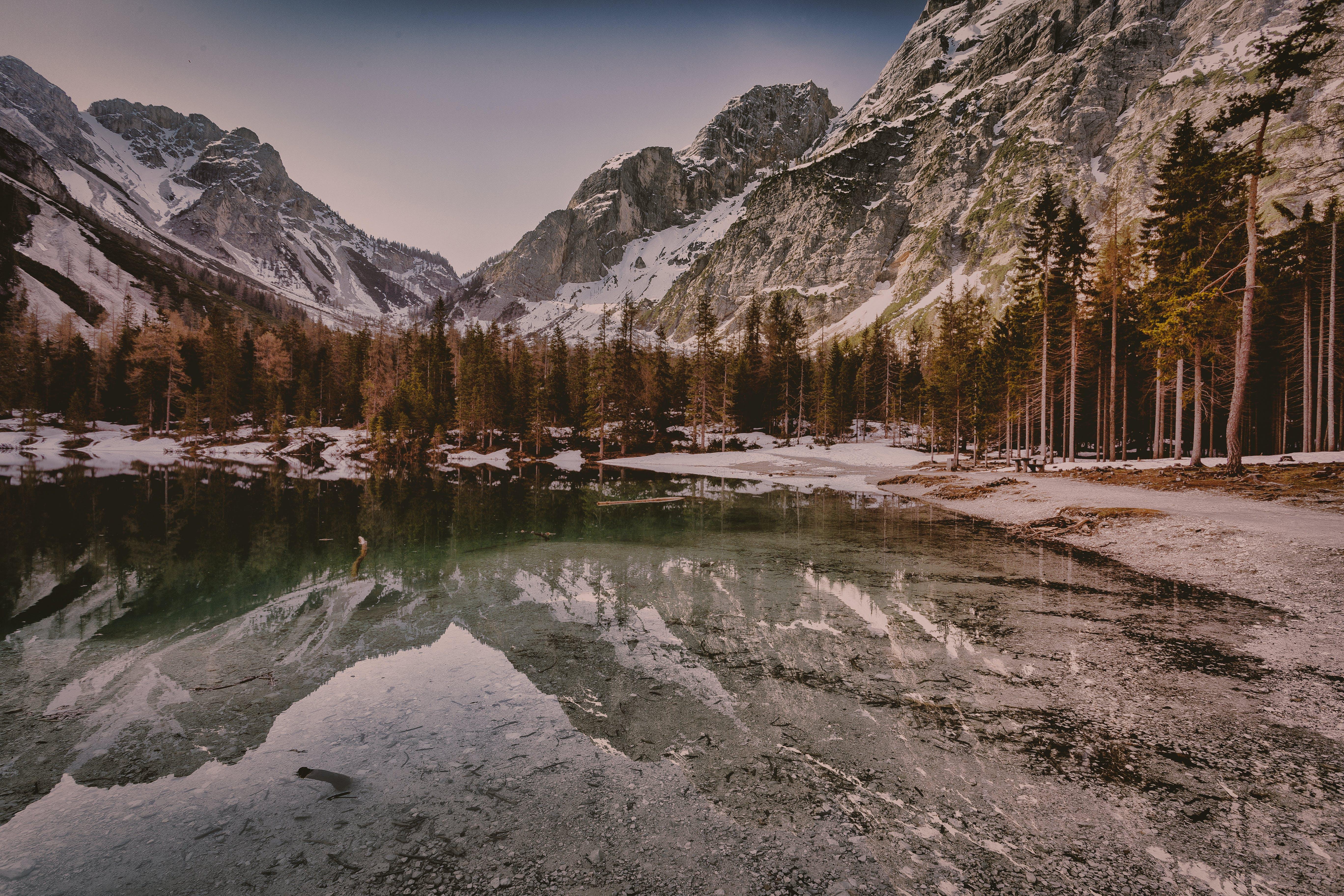 berg, bomen, fjord