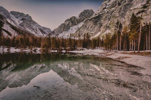 Foto profissional grátis de água, árvores, beira do lago, cênico