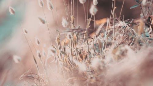 Fotobanka sbezplatnými fotkami na tému kvety, letné kvety, umenie
