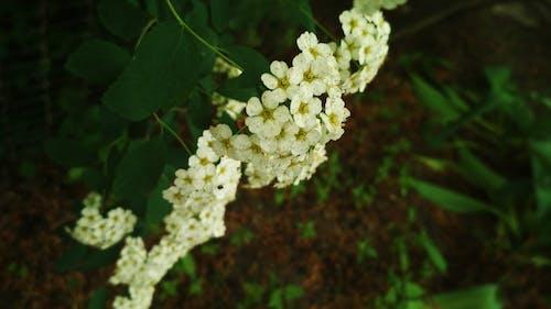 Fotobanka sbezplatnými fotkami na tému #les, kvety, nádherné kvety, umelé kvety