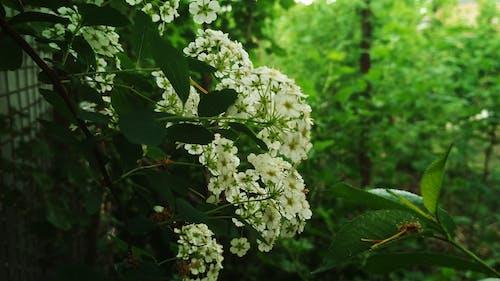 Foto profissional grátis de #árvore, atraente, ecológico, flores artificiais
