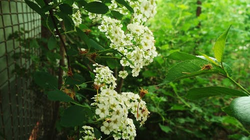 Základová fotografie zdarma na téma krásné květiny, květiny, les, strom