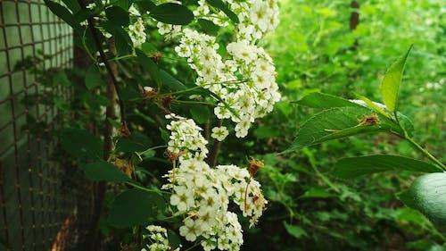 Fotos de stock gratuitas de árbol, bosque, flores, flores bonitas