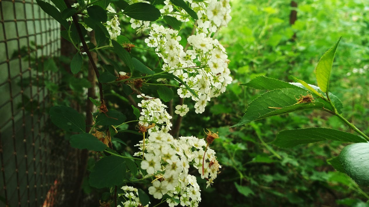 дерево, зеленый, красивые цветы