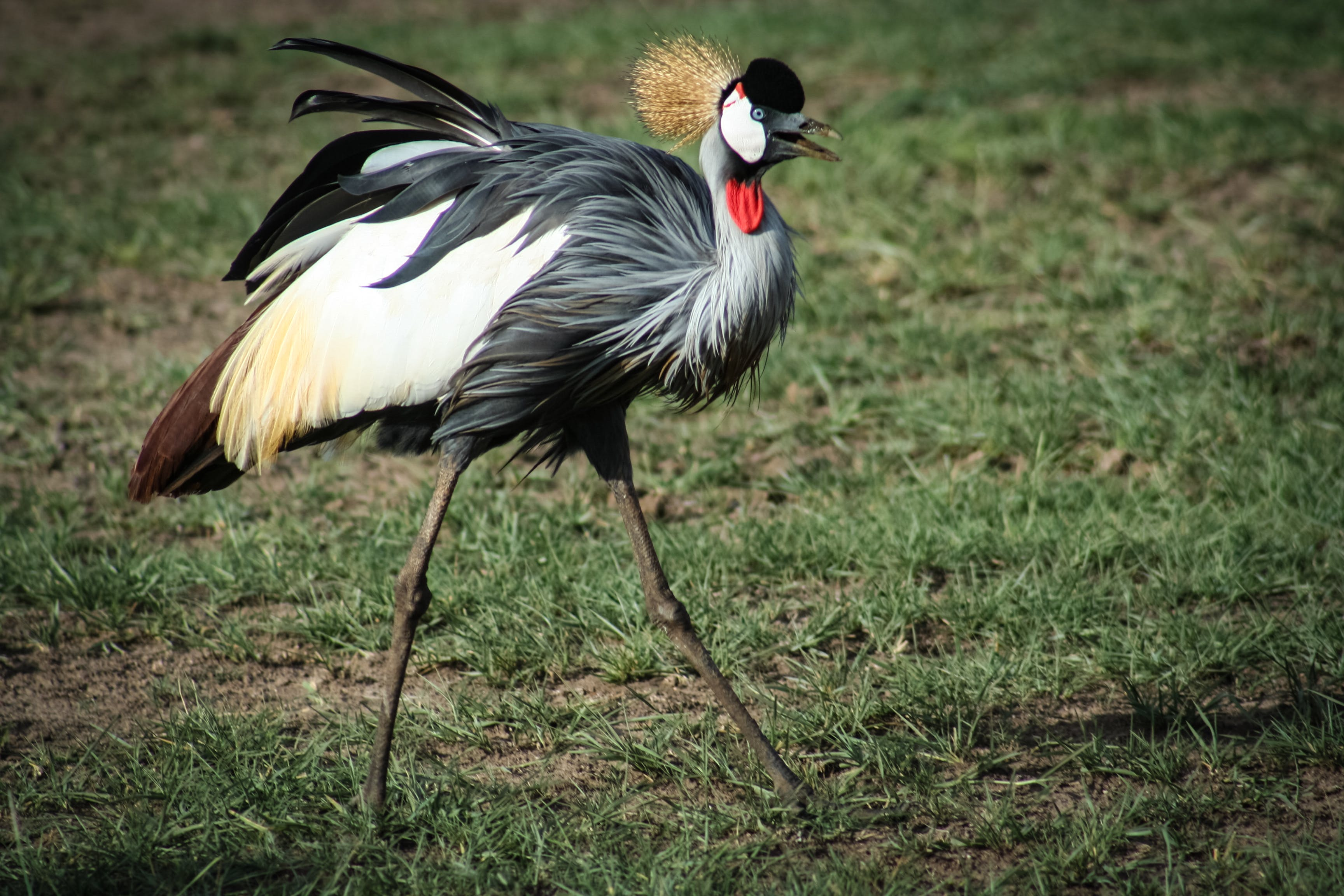 Photo of Black, White, and Brown crane bird
