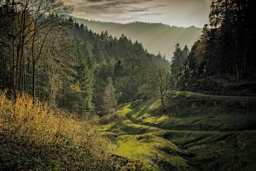 Green Forest Taken during Sunrise