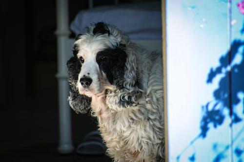 คลังภาพถ่ายฟรี ของ สุนัข, หมา