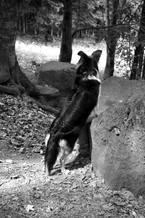 Immagine gratuita di bianco e nero, cane, cane nero