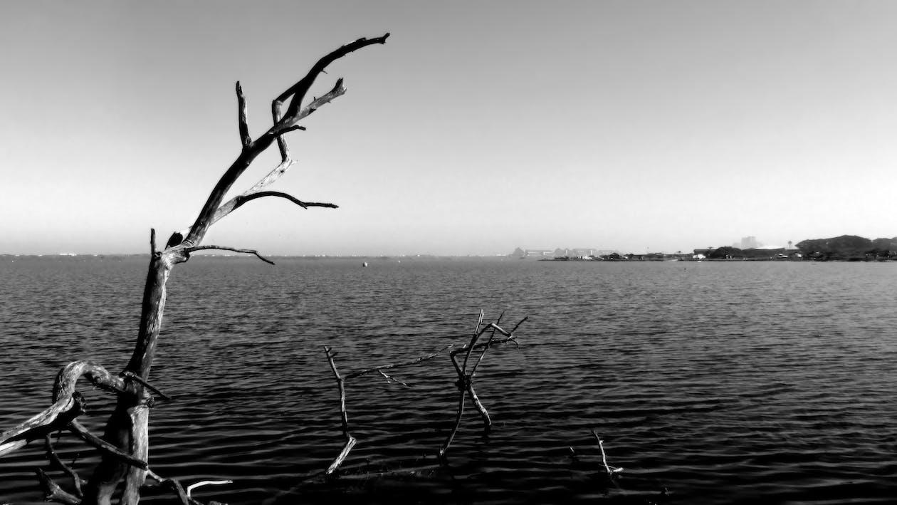 Free stock photo of deadwood, water