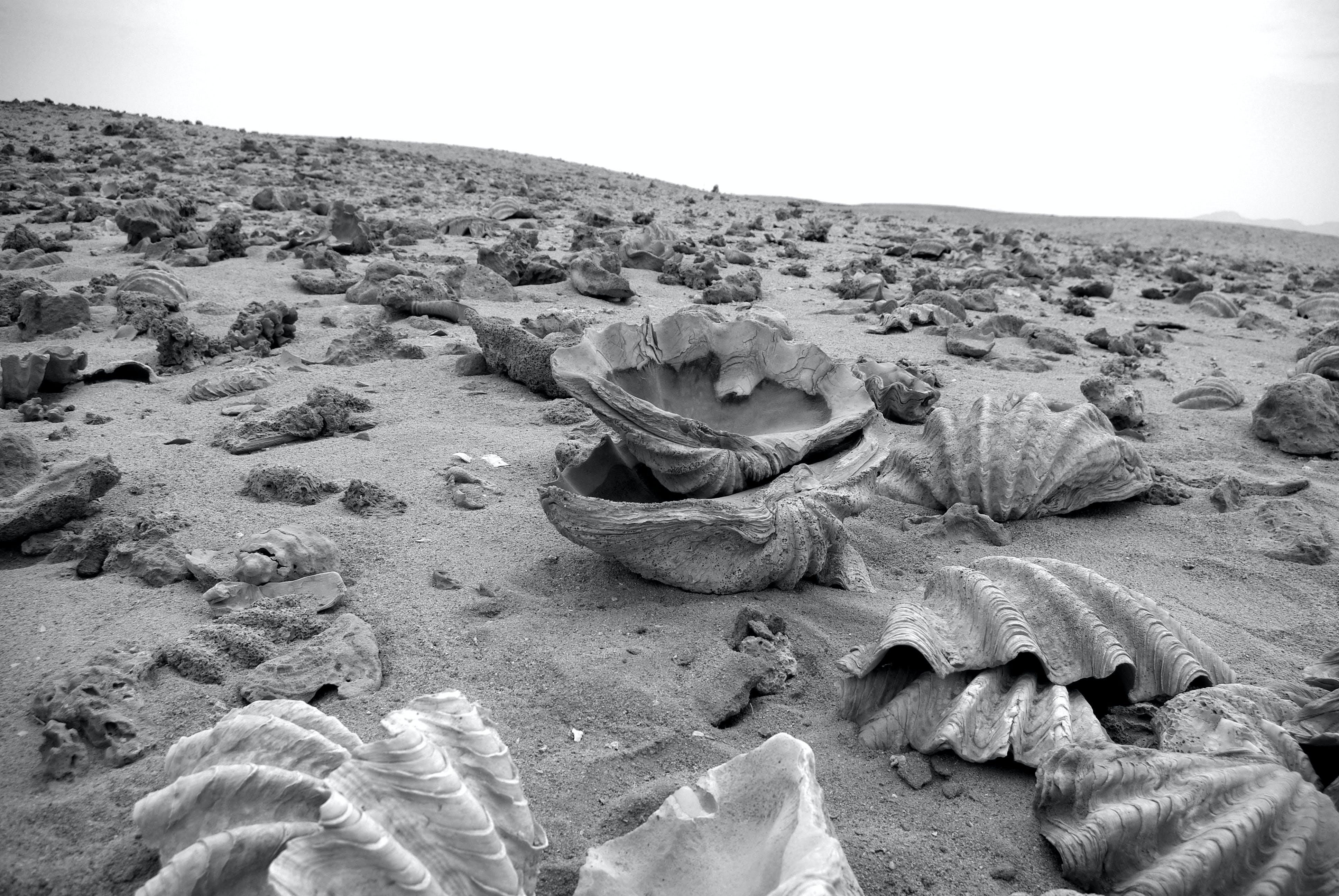 Free stock photo of black and white, cemetery, desert, shell