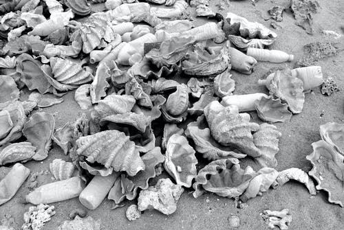 Free stock photo of black and white, environmental damage, garbage, plastic
