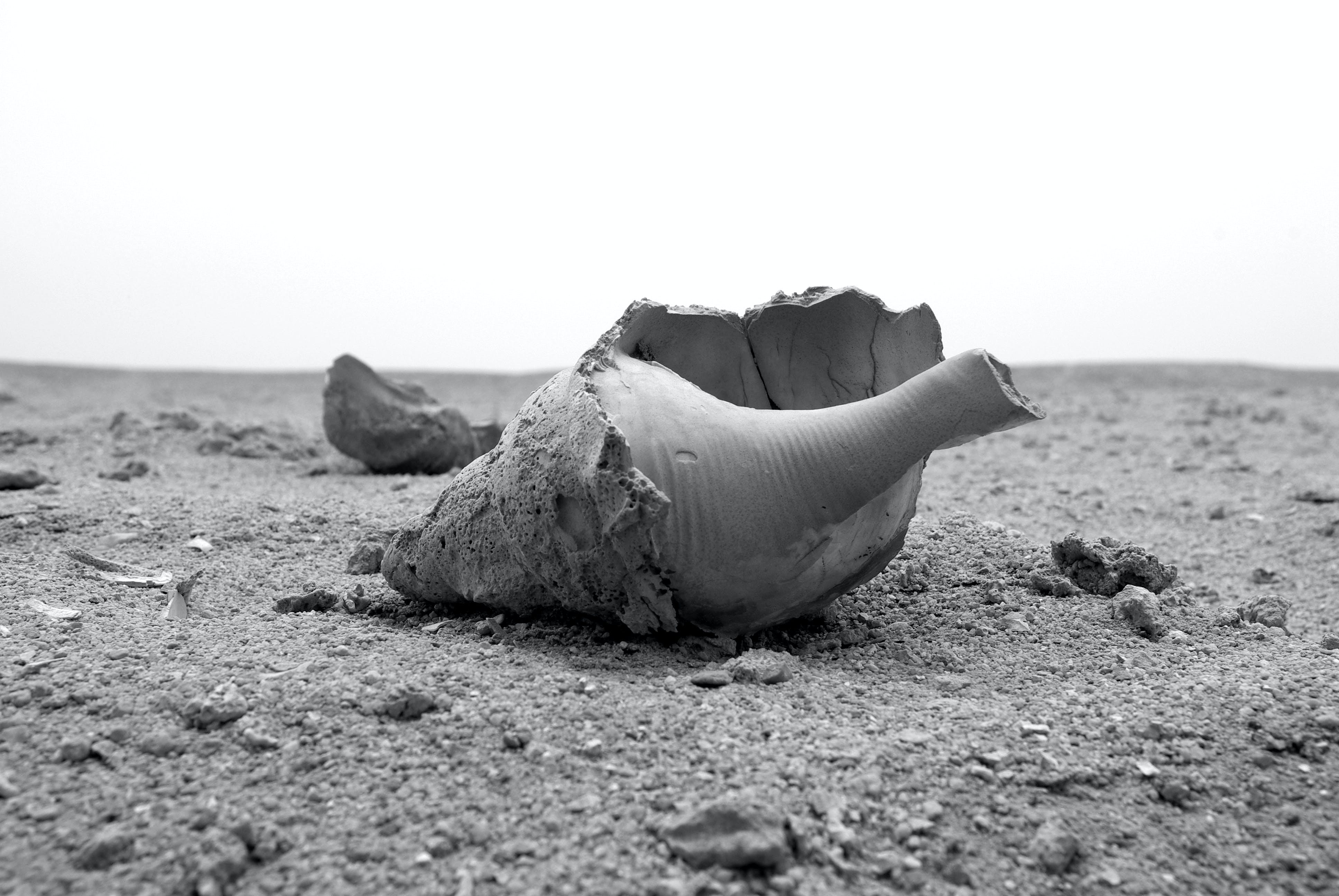 Free stock photo of black and white, dead, environment, environmental damage