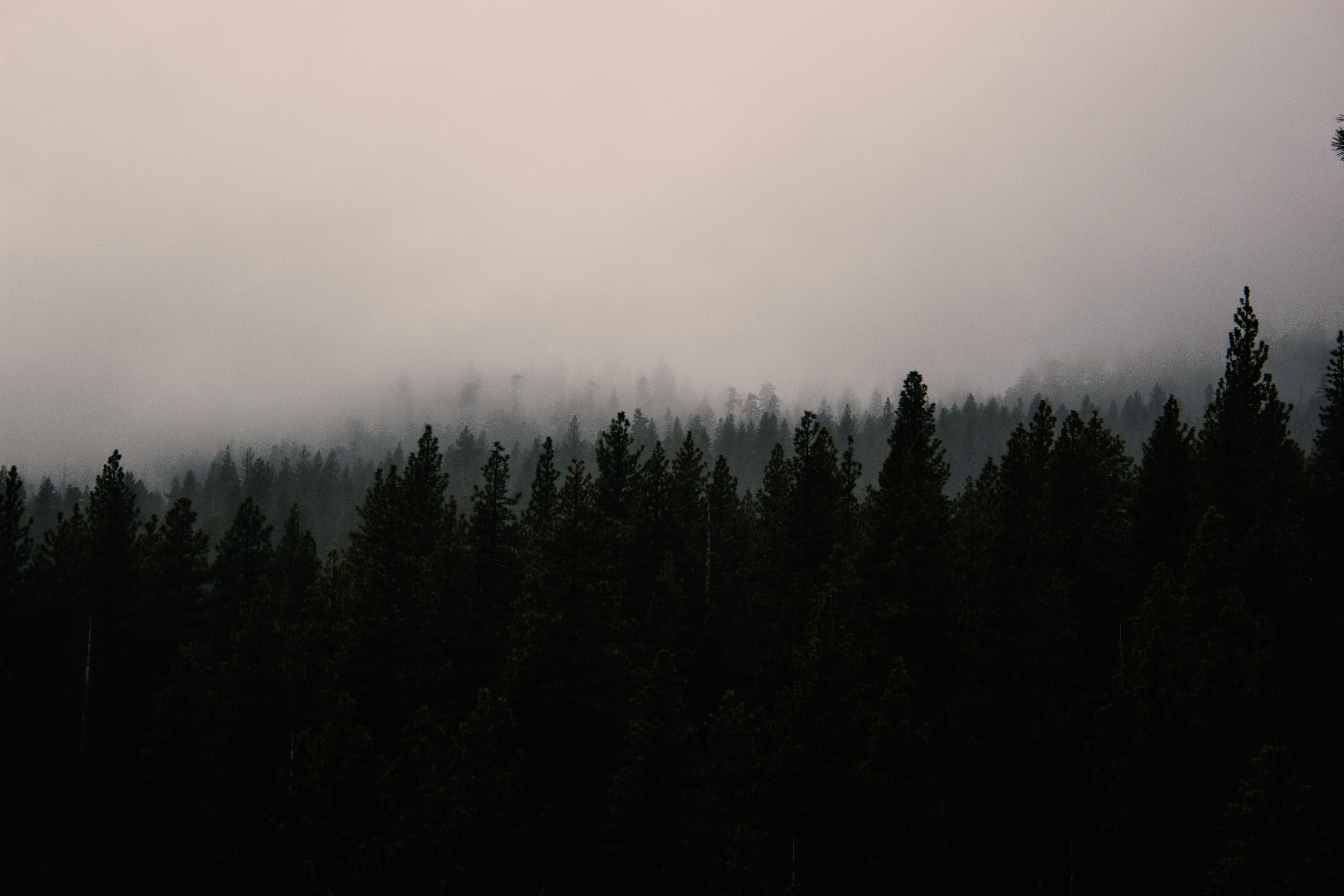 Photo of Silhouette of Trees