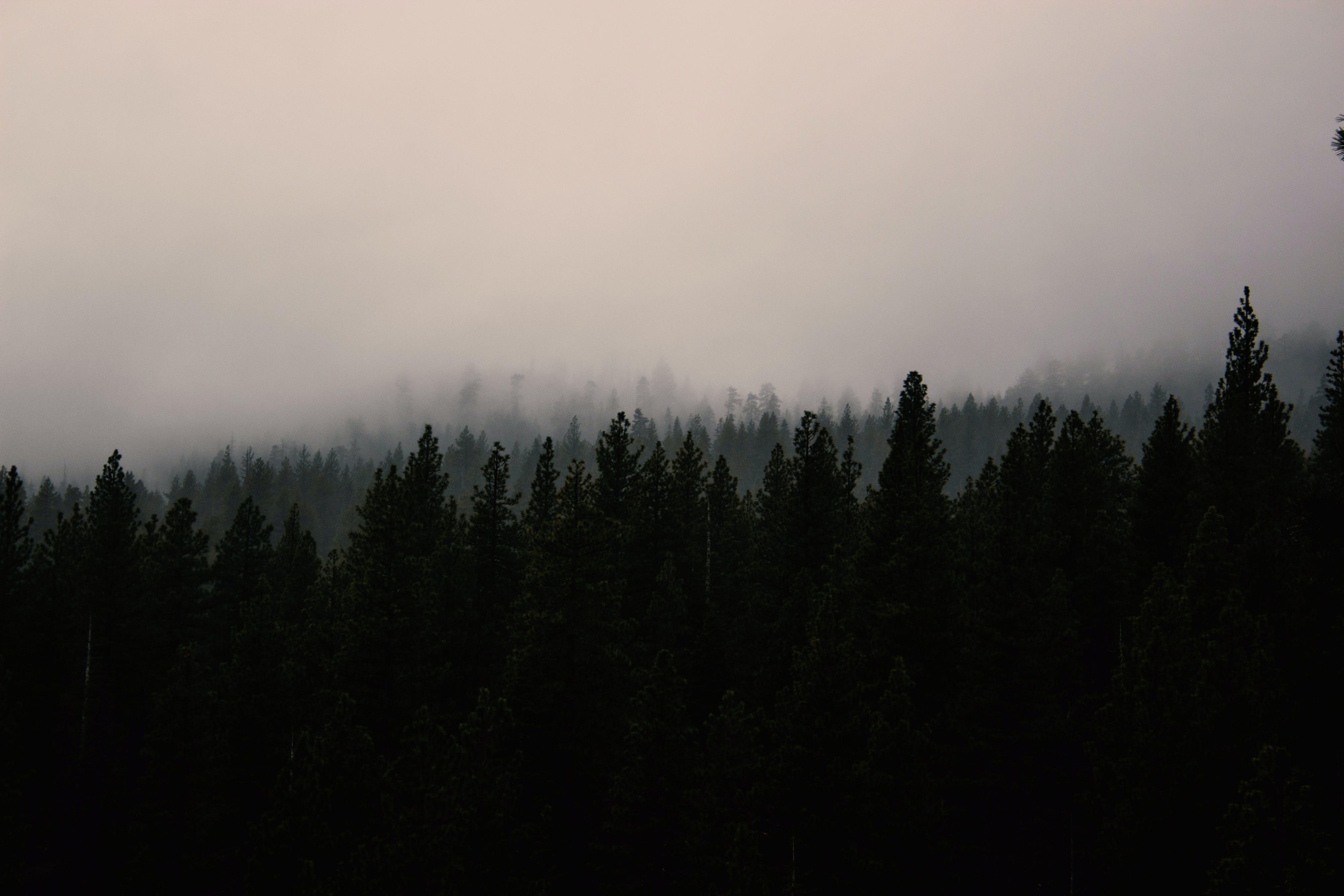 天性, 天空, 景觀, 樹木 的 免费素材照片