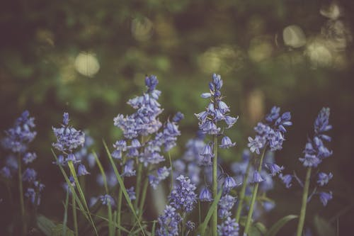 Ảnh lưu trữ miễn phí về cánh hoa, hệ thực vật, màu sắc, nền mờ